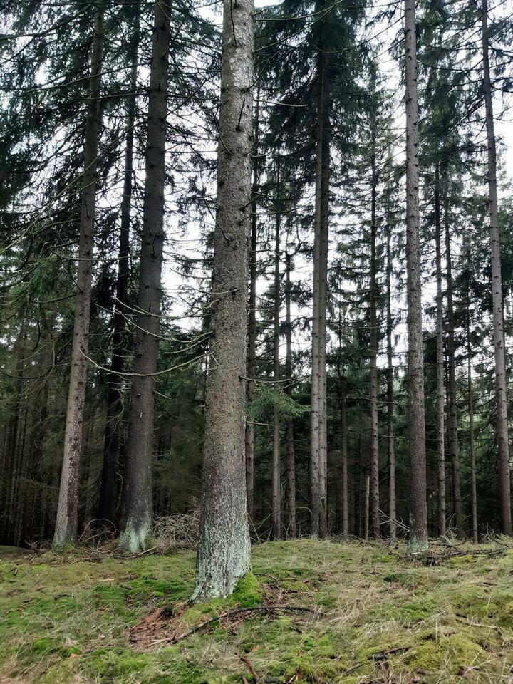Wald waldgrundstück waldfläche Grundstück Schwarzenbach am Wald
