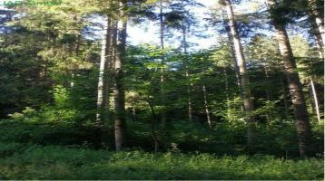Großes Waldgrundstück