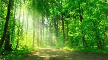 LAYER IMMOBILIEN: Waldgrundstück *ohne Käferbefall* gemischter Fichtenbestand