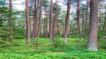 Waldgrundstück bei Leuchtenberg
