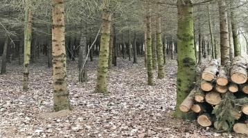 Heizen Sie mit Holz aus Ihrem eigenen Wald