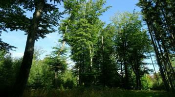 Waldgrundstück 1,6420ha Mischwald abzugeben