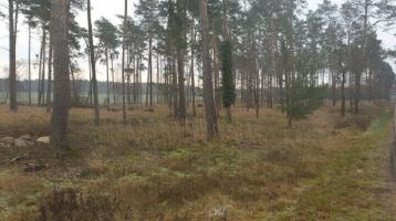 4,3 ha Wald und aufgeforstete Fläche nahe der BAB-9