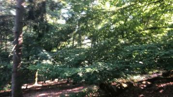 Wald, Forstfläche ,Holz, Grundstück