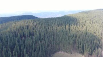 Wald als Kapitalanlage