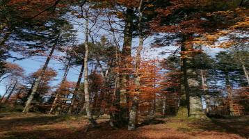 Wald 5 Hektar