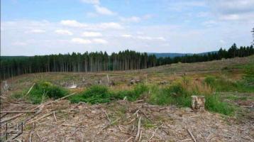 Kaufe Kahlflächen/Waldflächen/Wildflächen/Wiese/Acker