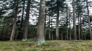Wald waldgrundstück waldfläche Grundstück
