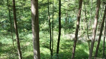 Perma Selbstversorger Projekt Waldgrundstück mit See zu verkaufen