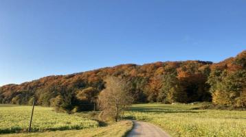 Mischwaldgrundstücke mit teilweise altem Baumbestand und Wiesenanteil